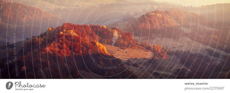 Herbst Panorama-Landschaft. Relikt bunte Buche, Hainbuchenholz Natur Ferien & Urlaub & Reisen Pflanze schön Baum rot Wald Berge u. Gebirge gelb Umwelt Wiese