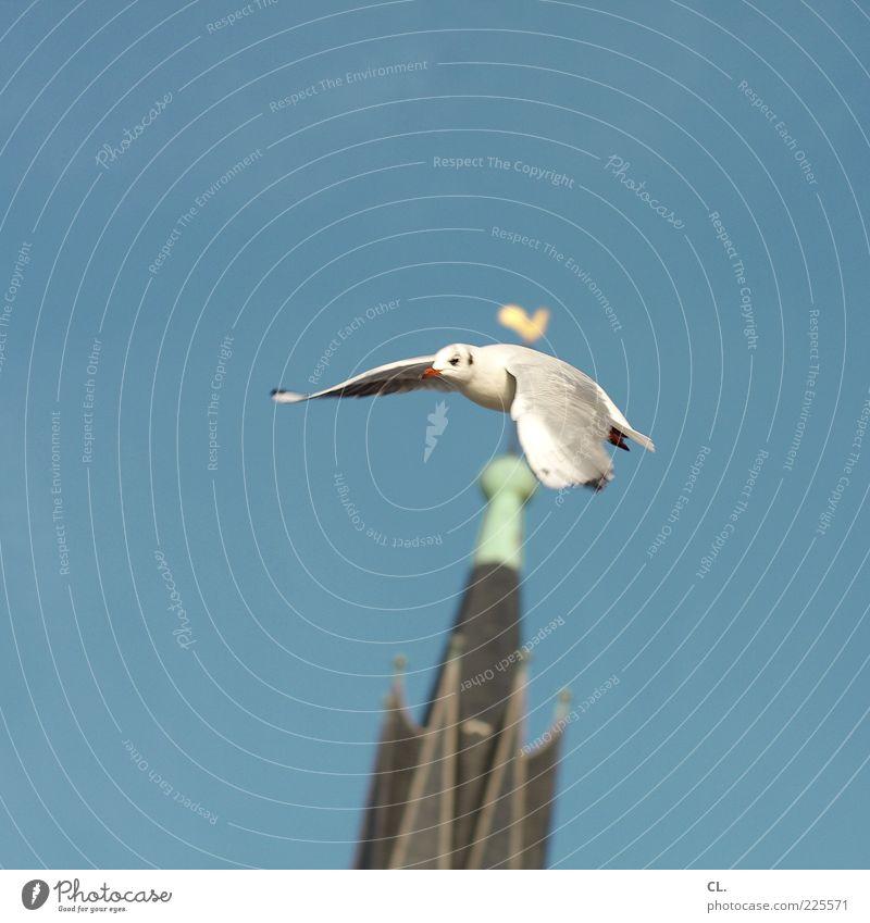 möwe Himmel Natur blau Sommer Tier Freiheit Vogel fliegen frei ästhetisch Kirche Flügel Tiergesicht Schönes Wetter Möwe Schnabel