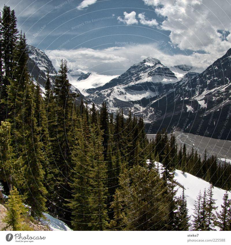 Icefields Parkway Natur Baum Ferien & Urlaub & Reisen Wald Schnee Berge u. Gebirge Reisefotografie Aussicht Tanne Flussufer Kanada USA Schneebedeckte Gipfel