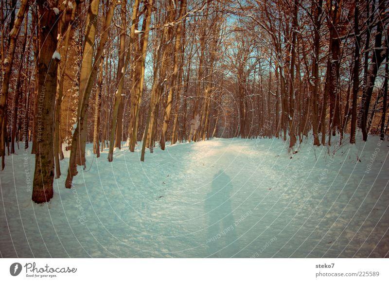 fotografiert schneller als sein Schatten Schnee Wald Wege & Pfade kalt stagnierend kahl Winterwald Außenaufnahme Sonnenlicht Mensch Fußweg 1 Baum Silhouette