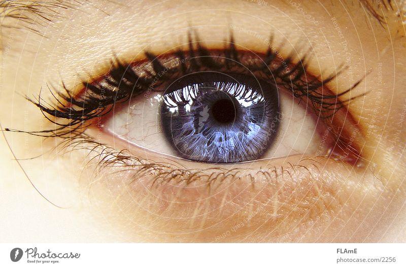 blaues Auge Mensch Frau Jugendliche blau schön 18-30 Jahre Erwachsene Wärme Auge Leben feminin natürlich Gesundheit glänzend leuchten nah