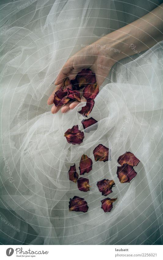 Frau Hand Erotik Einsamkeit Erwachsene Religion & Glaube Traurigkeit Senior Gefühle feminin Zeit Stimmung elegant Perspektive einzigartig Wandel & Veränderung