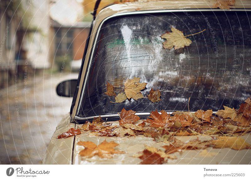 Wasser Blatt Einsamkeit Herbst Leben Gefühle Traurigkeit PKW Metall Stimmung Regen Kunst Glas Verkehr Urelemente Tropfen