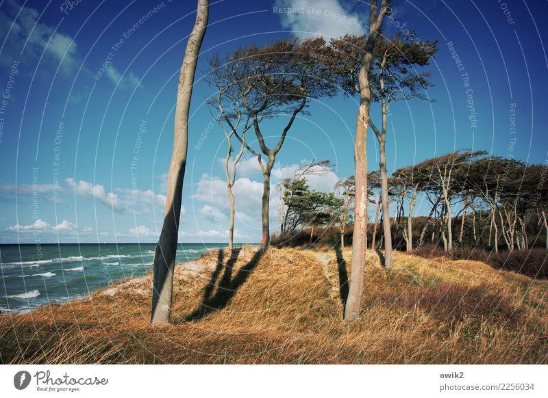 Hoch im Norden Ausflug Ferne Umwelt Natur Landschaft Pflanze Wasser Himmel Wolken Horizont Schönes Wetter Baum Gras Sträucher Wellen Küste Strand Ostsee