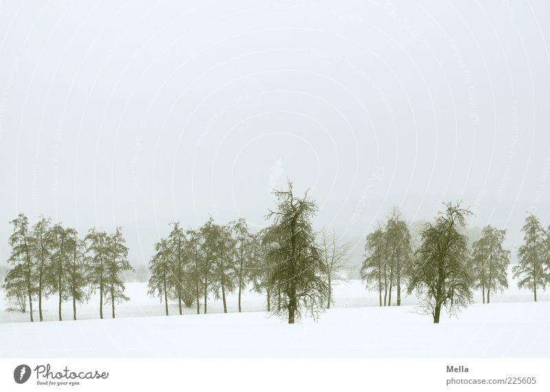 Nach wie vor Umwelt Natur Landschaft Winter Klima Wetter Schnee Baum kalt natürlich trist grau Stimmung Farbfoto Außenaufnahme Menschenleer Textfreiraum oben