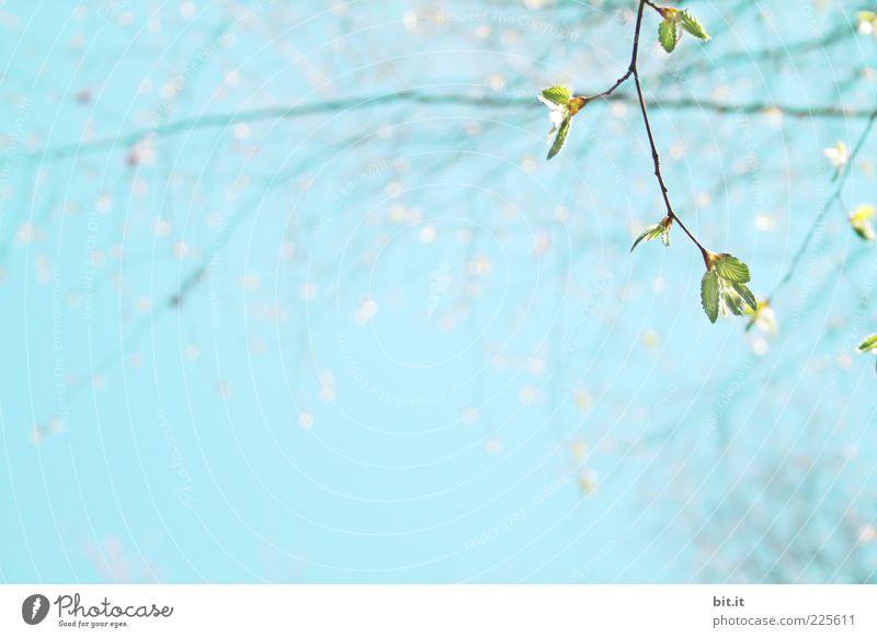 alle schreien: Frühling Wellness Leben harmonisch Erholung ruhig Meditation Ostern Umwelt Natur Himmel Wolkenloser Himmel Sommer Schönes Wetter Baum Blatt blau