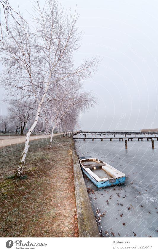 gestrandet Wasser alt Baum Winter ruhig Einsamkeit kalt Eis kaputt Frost Wandel & Veränderung Gelassenheit Vergangenheit Seeufer Anlegestelle stagnierend