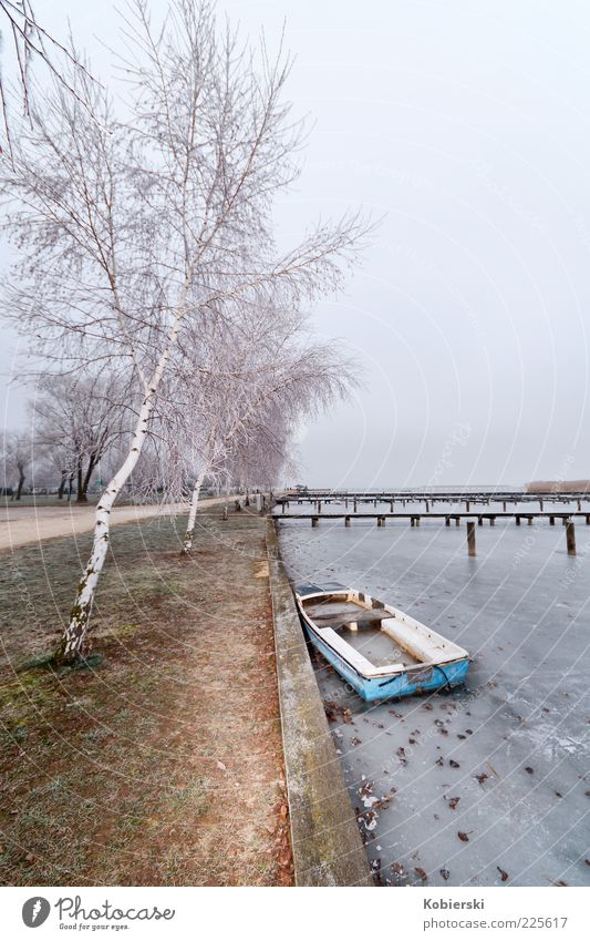 gestrandet Winter Ruderboot Wasser Eis Frost Baum Seeufer Binnenschifffahrt alt kalt kaputt Gelassenheit ruhig Einsamkeit stagnierend Vergangenheit