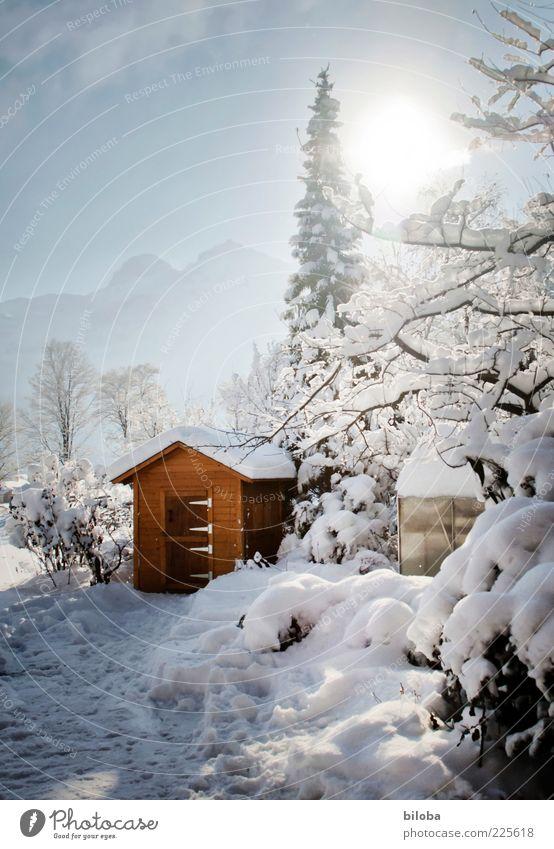 Wintermärchen Sonne Sonnenlicht Schönes Wetter Eis Frost Schnee Garten blau braun weiß Gartenhaus Baum Gegenlicht Menschenleer