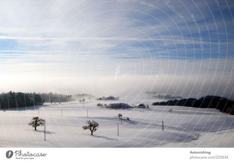 der Nebel kommt! Umwelt Natur Landschaft Pflanze Erde Luft Himmel Wolken Horizont Winter Wetter schlechtes Wetter Eis Frost Schnee Baum Wald Hügel kalt nass