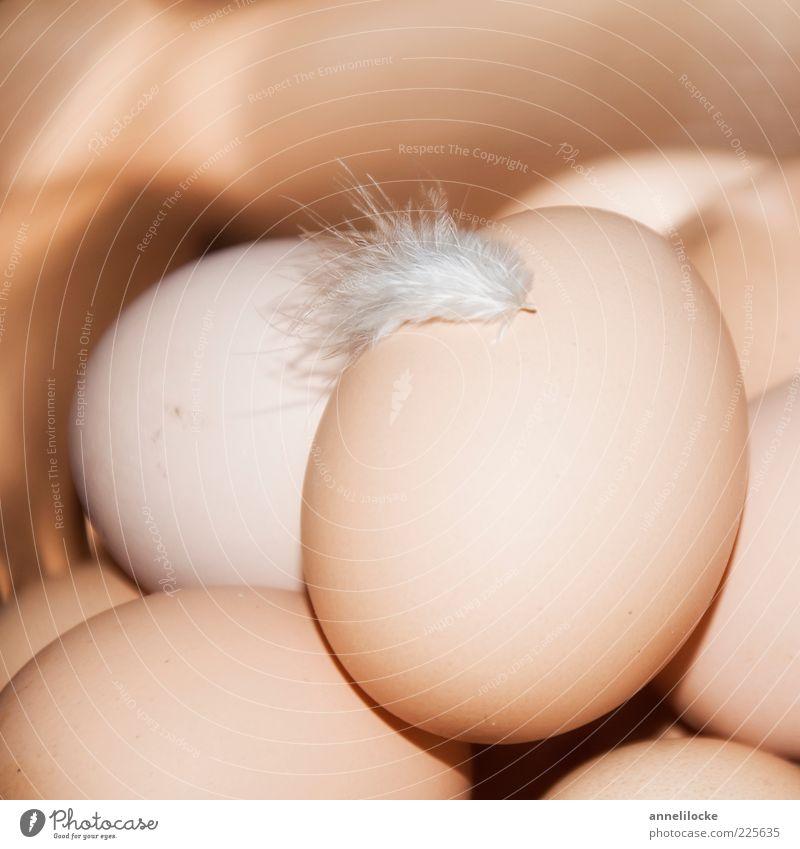 Landei Lebensmittel Ei Hühnerei Ernährung Bioprodukte Feder lecker weich braun Hoffnung Überraschung Wachstum Frühling zart viele Farbfoto Gedeckte Farben