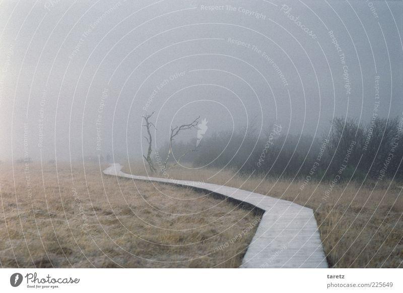 verschwinden Winter Einsamkeit Ferne kalt Herbst Gras Wege & Pfade Traurigkeit Angst Nebel Sträucher Wandel & Veränderung Vergänglichkeit Sehnsucht