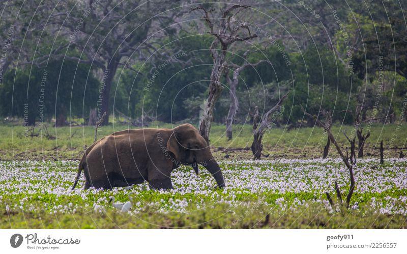 Blumenbad Ferien & Urlaub & Reisen Tourismus Ausflug Abenteuer Sightseeing Safari Natur Landschaft Pflanze Baum See Sri Lanka Asien Tier Wildtier Tiergesicht
