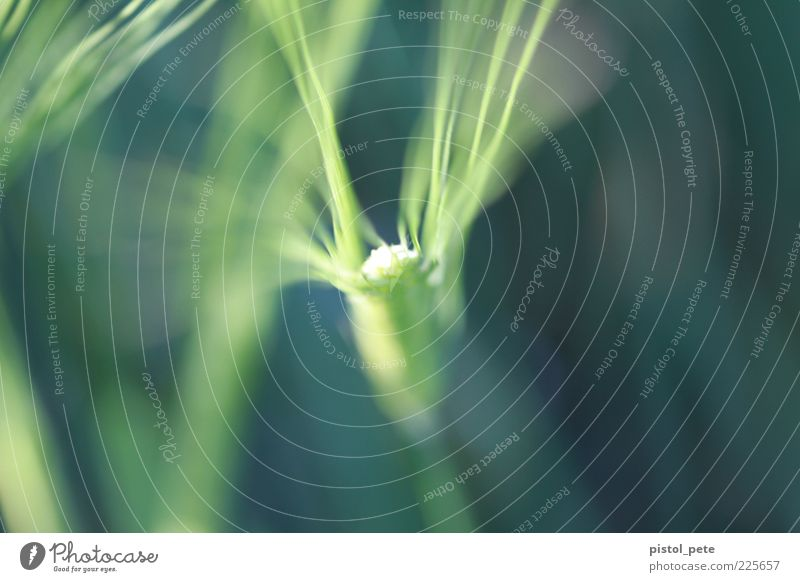 frühlingserwachen grün Pflanze Frühling Stengel Schönes Wetter Frühlingsgefühle Makroaufnahme Pflanzenteile
