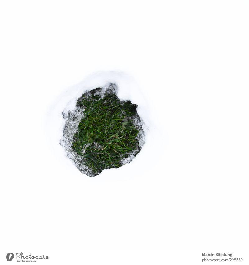 O Natur grün weiß Umwelt Wiese Schnee Gras hell frisch rund Loch saftig schmelzen tauen Muster
