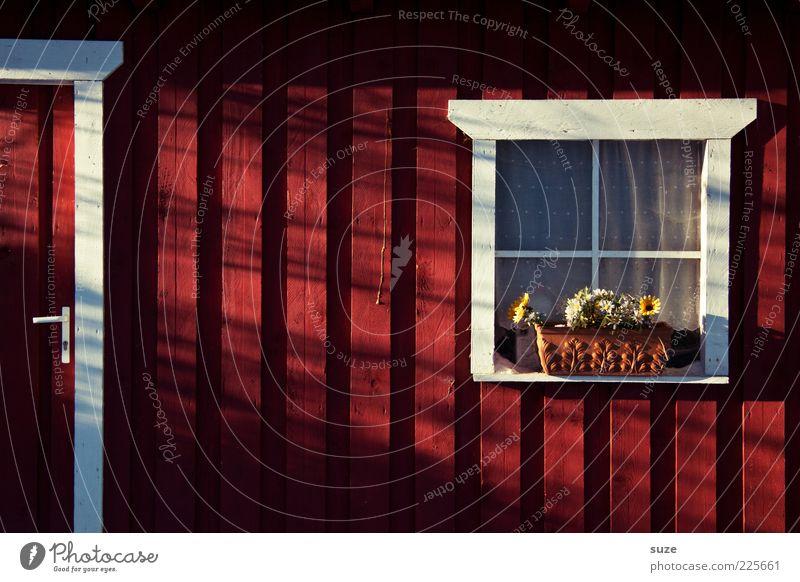 Sommerhaus rot Fenster Holz Tür Fassade geschlossen Hütte Holzbrett Vorhang gemütlich Gardine Schweden Griff Norwegen Blumentopf Holzwand