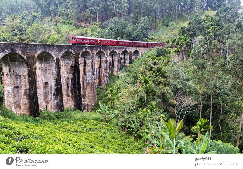 Zug verpasst.... Ferien & Urlaub & Reisen Tourismus Ausflug Abenteuer Freiheit Expedition Umwelt Natur Landschaft Baum Gras Sträucher Wald Urwald Sri Lanka