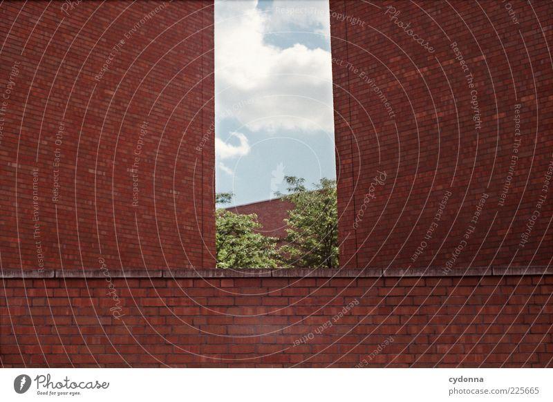 Natur vs. Stadt Himmel Baum Blatt ruhig Einsamkeit Haus Leben Wand Freiheit Architektur Mauer träumen Fassade ästhetisch Wachstum