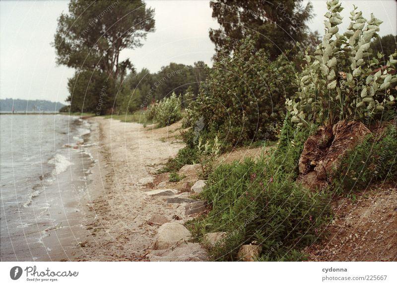 Stürmische Zeit Natur schön Baum Strand Einsamkeit Freiheit Umwelt Landschaft Bewegung Wege & Pfade Luft See Wind Sträucher einzigartig Wandel & Veränderung