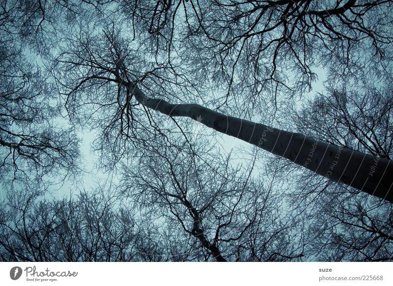 Greifer Umwelt Natur Winter Wetter Baum Wald außergewöhnlich dunkel groß kalt blau grau Traurigkeit Trauer Wachstum Geäst Zweig Baumkrone laublos Ast Baumstamm