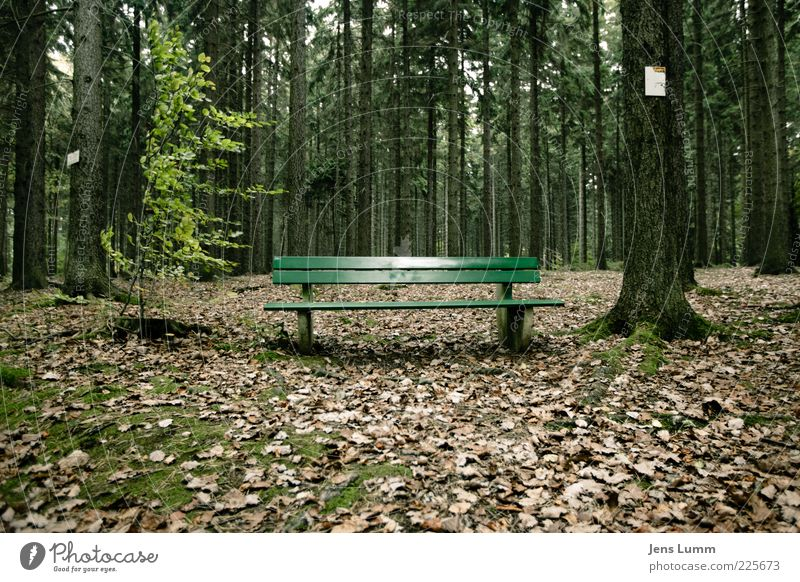 Wait and see Umwelt Natur Herbst Wald braun grün Einsamkeit Bank Blatt Moos Pause Farbfoto Außenaufnahme Menschenleer Tag Zentralperspektive Holzbank 1