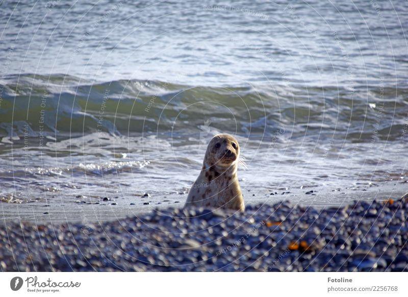 Wo ist der komische Mensch? Umwelt Natur Tier Urelemente Erde Wasser Winter Schönes Wetter Wellen Küste Nordsee Meer Insel Wüste Wildtier Tiergesicht 1 frech