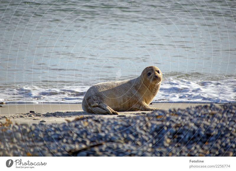 Baden oder nicht baden, das ist hier die Frage. Umwelt Natur Tier Urelemente Erde Sand Wasser Wellen Küste Strand Nordsee Meer Insel Wildtier 1 frei hell nah