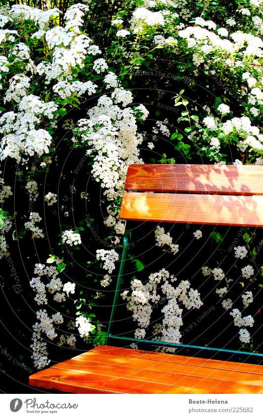 Unterm weißen Baume sitzend Natur grün Pflanze Freude Sommer Blume Blatt ruhig Erholung Umwelt Blüte Frühling Stimmung ästhetisch