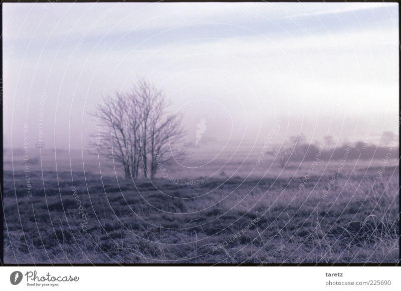 Weite Natur Baum ruhig Einsamkeit Ferne kalt Wiese Herbst Landschaft Gras Sträucher Hügel Schönes Wetter Raureif Morgen abgelegen