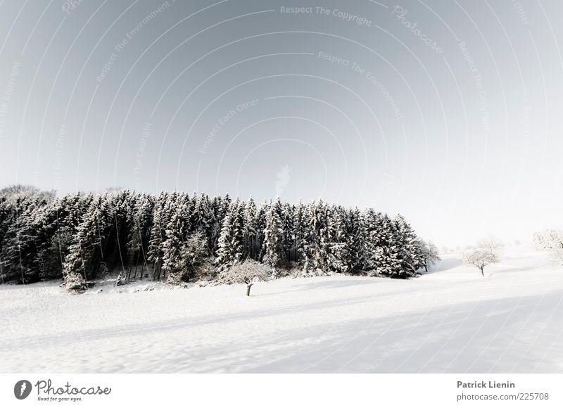 Penguins in the cold Umwelt Natur Landschaft Urelemente Luft Himmel Wolkenloser Himmel Winter Wetter Schönes Wetter Schnee Pflanze Baum Wald Hügel Blick
