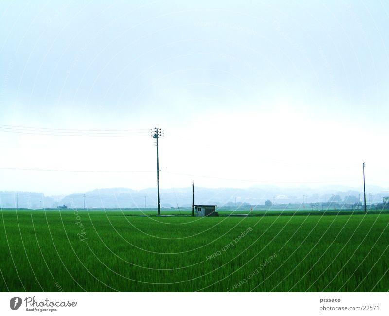japan grün Landschaft Hütte Ebene