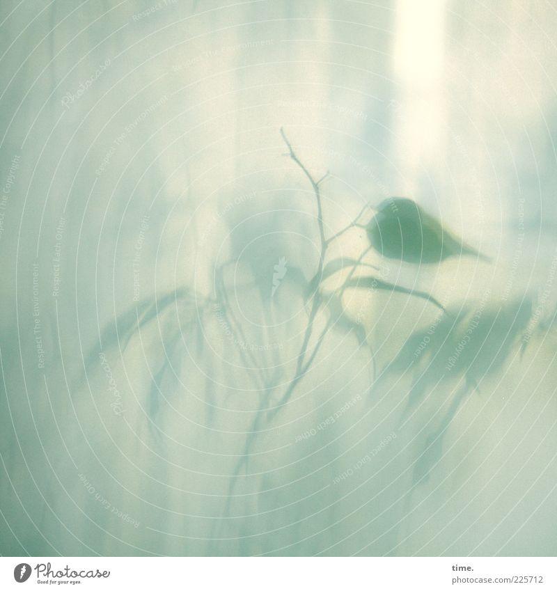 Neulich im Märchengarten Dekoration & Verzierung Pflanze Blatt Vogel Flügel fliegen weich blau grün Glasscheibe filigran sanft zart Lebewesen Ast diffus