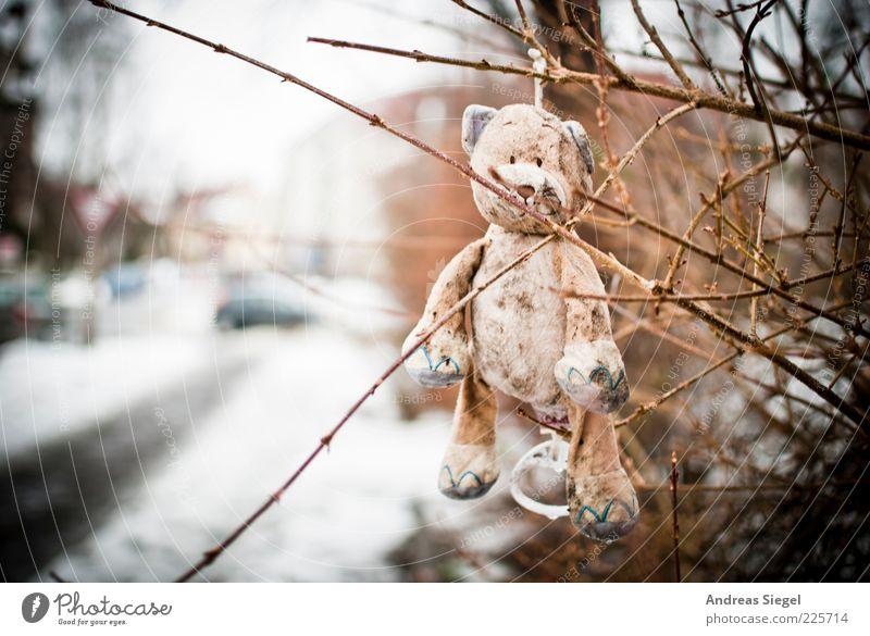 Keep smiling Teddybär Natur Winter Schnee Sträucher Straße Spielzeug Stofftiere hängen Traurigkeit außergewöhnlich dreckig Fröhlichkeit kuschlig kaputt trist