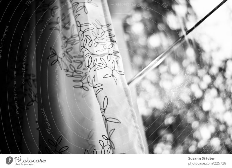 leiseblinzelnleuchtendschön Baum Fenster außergewöhnlich Vorhang Fensterscheibe Gardine Schwarzweißfoto