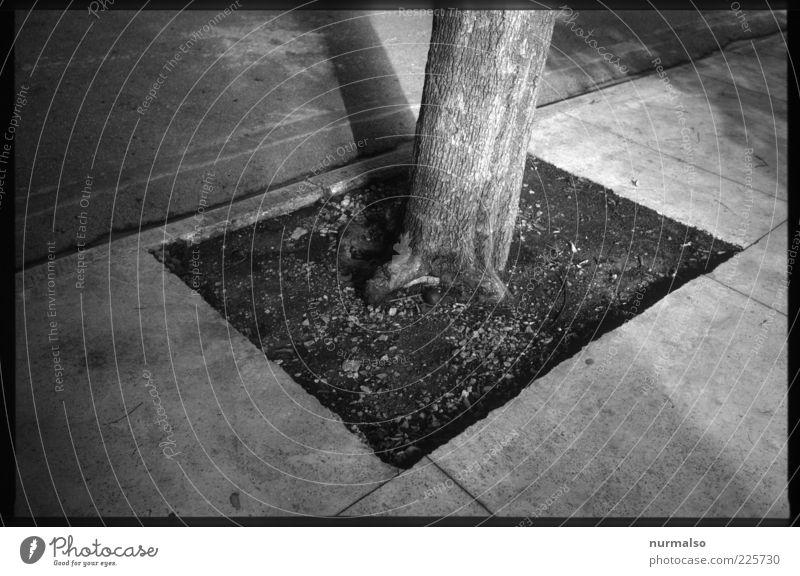 diverse Kanten Natur Baum dunkel Umwelt Stimmung Erde trist trocken Bürgersteig trashig Baumstamm eckig nachhaltig stagnierend Wege & Pfade Wegrand