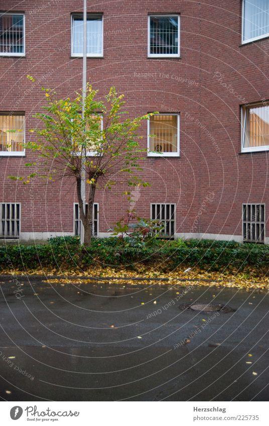 Knastgrün Wasser schön Baum rot Einsamkeit Freiheit Herbst Regen Angst Fassade Wachstum trist Asphalt Schutz Gewalt