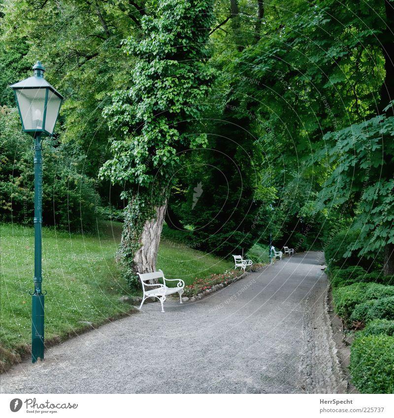 Im Kurpark grün schön Baum Pflanze Sommer ruhig Einsamkeit grau Wege & Pfade Park leer ästhetisch Perspektive Sträucher Laterne Bank