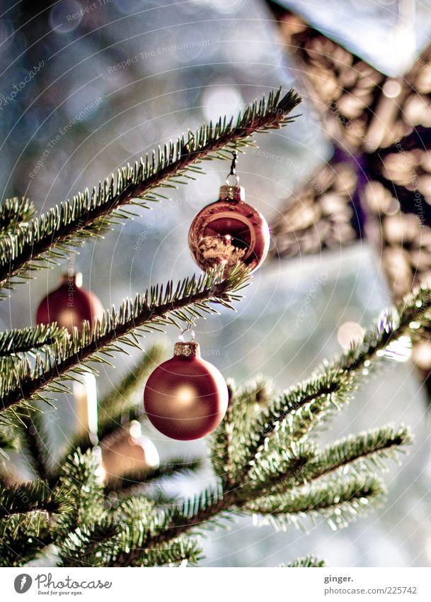 Weihnachten ist jetzt schon lang vorbei... grün Weihnachten & Advent Stern (Symbol) rund Weihnachtsbaum hängen Christbaumkugel Weihnachtsdekoration Lichtspiel Lichtpunkt Zweige u. Äste Nadelbaum Tannennadel Weihnachtsstern Lichteinfall kupfer