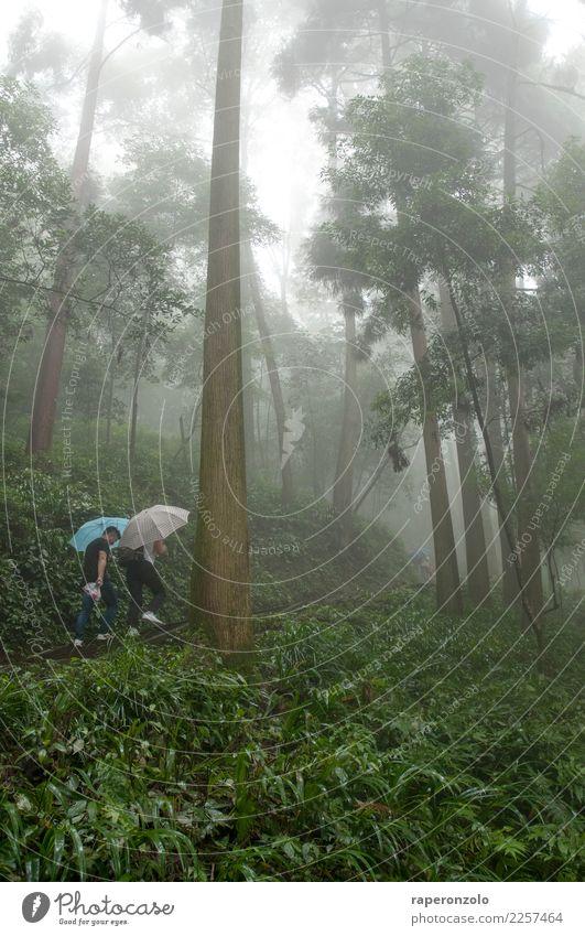 Zwei Männer mit Schirmen, viel Grün, ein Wald, Nebel Ferien & Urlaub & Reisen Ausflug Mensch maskulin Mann Erwachsene Natur Landschaft Sommer schlechtes Wetter