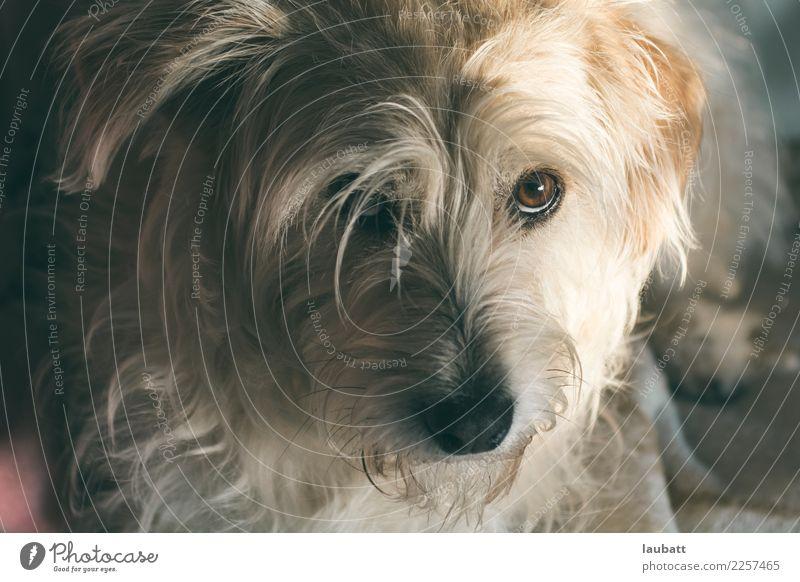 Ich war es nicht! Tier Haustier Hund Tiergesicht Schwärmerei Hundeblick Welpe 1 Akzeptanz Vertrauen Einigkeit loyal Warmherzigkeit Sympathie Freundschaft