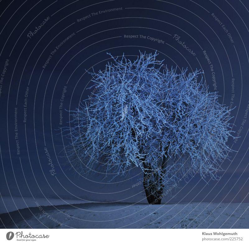 In the moonlight ruhig Winter Schnee Himmel Wolkenloser Himmel Nachthimmel Stern Horizont Baum frieren blau weiß Idylle Raureif Einsamkeit Romantik staunen