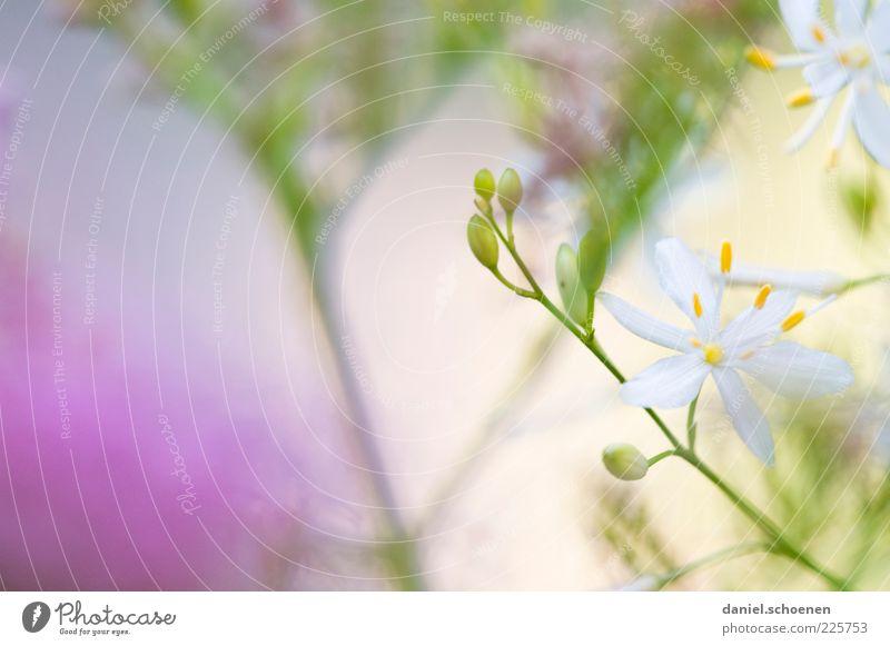 noch ein Mädchenfoto Pflanze Blatt Blüte hell grün violett weiß Sommer Frühling Blume Detailaufnahme Makroaufnahme Textfreiraum links Textfreiraum oben