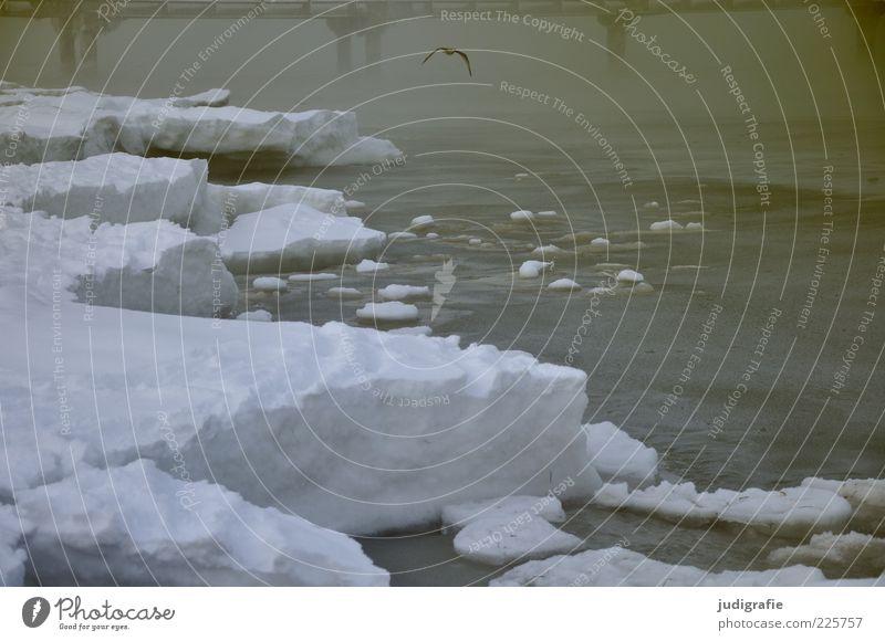 Ostsee Umwelt Natur Landschaft Wasser Winter Klima Wetter Nebel Schnee Küste Strand Meer Prerow dunkel kalt natürlich Stimmung Seebrücke Farbfoto Außenaufnahme