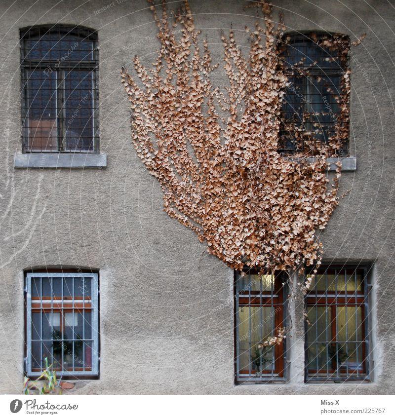 Urlaubsdomizil Haus Herbst Winter Pflanze Efeu Blatt Mauer Wand Fassade Fenster dehydrieren Wachstum alt dreckig dunkel trist braun Endzeitstimmung Verfall