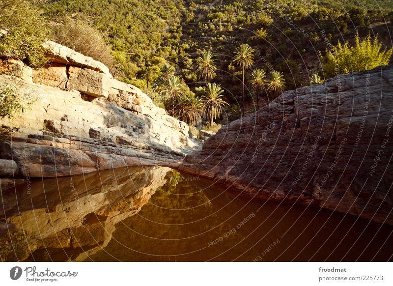 die braune lagune ruhig Ferne Sommerurlaub Umwelt Natur exotisch natürlich Romantik Fernweh Marokko Felsen Lagune Palme dreckig Idylle Farbfoto Gedeckte Farben