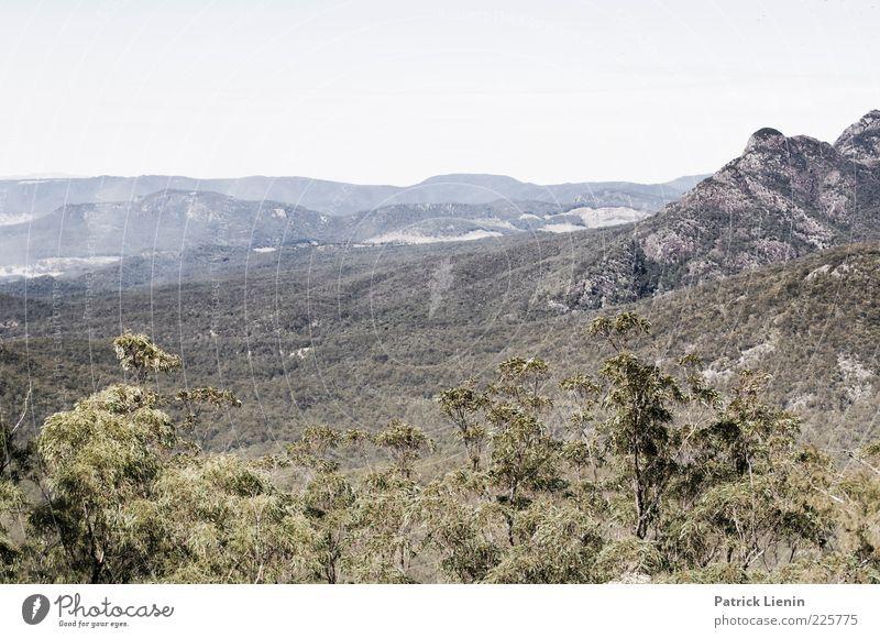 Mt. May Umwelt Natur Landschaft Pflanze Urelemente Erde Luft Himmel Sommer Klima Klimawandel Wetter Baum Wald Urwald Hügel Felsen Berge u. Gebirge wandern