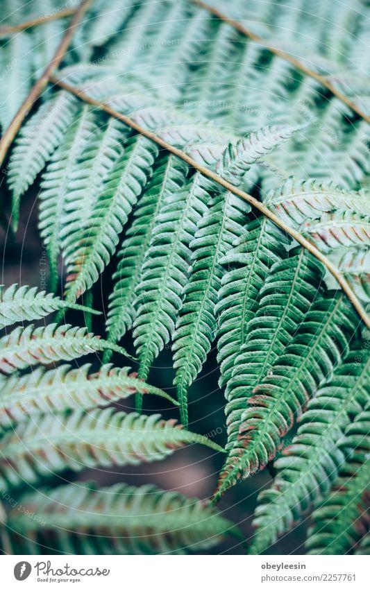 Kreatives Layout aus grünen Blättern Natur Pflanze Sommer Farbe weiß Baum Blatt Wald natürlich Kunst Garten Mode oben hell Wachstum