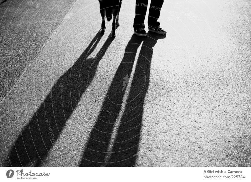 standing tall Mensch Tier Hund Beine Fuß Schuhe Zusammensein warten stehen Spaziergang Asphalt leuchten lang Schönes Wetter Zusammenhalt Turnschuh