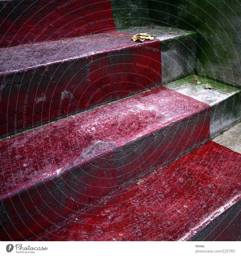 HH10.1 | Roter Treppichpichpich alt grün rot Blatt Mauer grau Treppe Perspektive Beton Ecke Bodenbelag Moos Eingang diagonal Schimmelpilze Fälschung