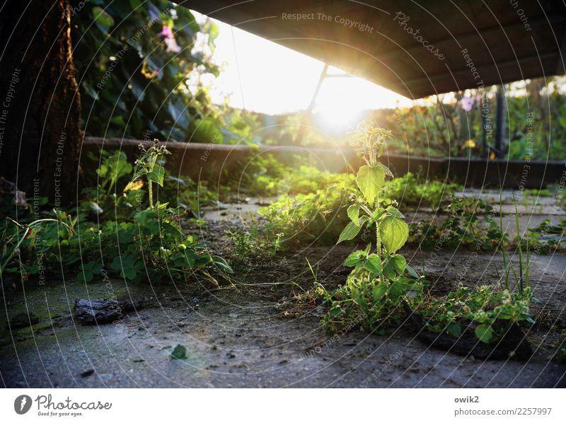Bei Hempels unter der Hollywoodschaukel Natur Pflanze ruhig Leben Umwelt klein Garten Zufriedenheit leuchten Erde Wachstum Sträucher Lebensfreude Schönes Wetter